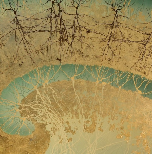 UCSD_hippocam_us_closeup-e1325909303321-600x609