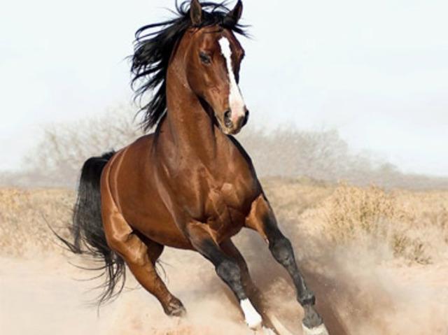 horse_ebooks_large_verge_medium_landscape-1