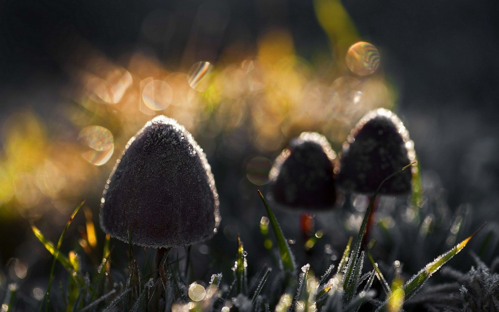 Mushrooms Into Twilight Wide Desktop Background