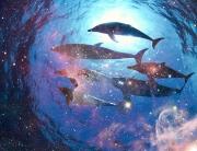 dolphin-cosmic